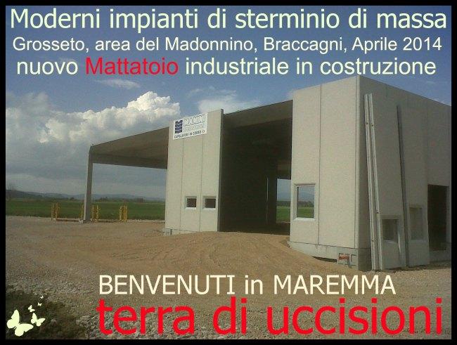"""Il """"mestiere"""" di ammazzare: Mattatoio del Madonnino, Braccagni ( GR )"""