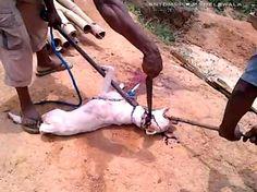 dog on the ground