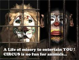 circus-animals-no-fun