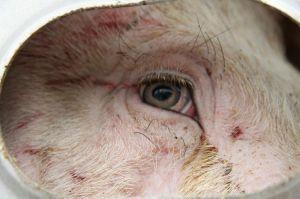 Guarda negli occhi questo individuo e prova a raccontarti quanto di poco conto siano tutte quelle cicatrici sul suo volto.