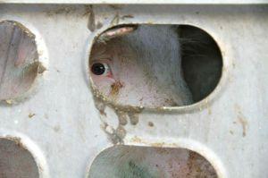 ...degli occhi azzurri velatamente preoccupati  che ci fissano...